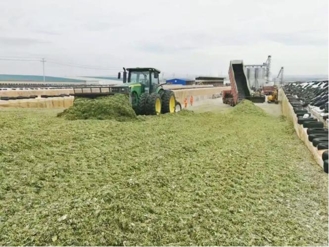 畜牧养殖 又到青贮饲料收贮黄金时节 科拓生物乳酸菌专用发酵剂来帮忙